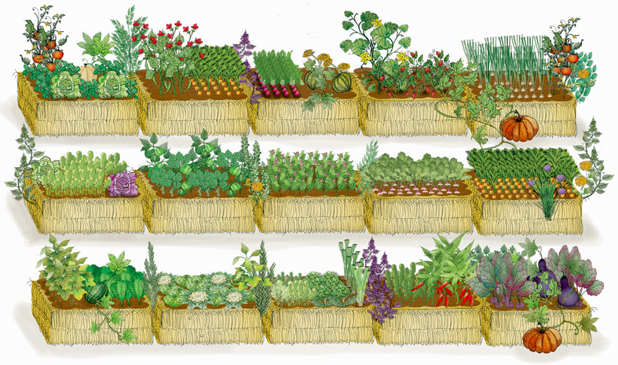 the description of the subsistence method of growing crops horticulture Intensive gardening methods id 426-335  you must decide which crops you want to grow based on your own likes and dislikes, as well as how much of each you will.